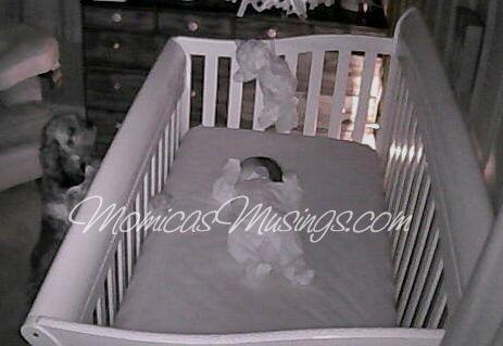Baby V Crib 2